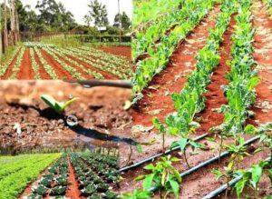 روش های آبیاری قطره ای چیست ؟ آبیاری قطره ای به یکی از روش های نوین آبیاری تحت فشار گفته می شود که در نیم قرن اخیر به عنوان کارآمدترین شیوه آبیاری در کشاورزی استفاده شده است. در این روش آب تحت فشار، کم کم (در حد مقدار مشخص) به وسیله شبکه ای از لوله های پلی اتیلن متصل شده به یک دیگر، به پای گیاه منتقل می شود. بعد از آن نیز به شکل جریانی مستمر، آهسته و ادامه دار در اختیار ریشه گیاه قرار می گیرد. به همین دلیل با استفاده از این شیوه آبیاری میزان هدر رفت آب تا حد بسیار زیادی کاهش پیدا می کند.