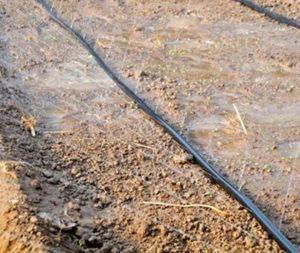 با توجه به بحران کمبود آب و همچنین صرفه جویی در مصرف آن، تمامی افراد به دنبال راه و روشی هستند که بتوانند از منابع آبی کشور به صورت بهینه استفاده کنند.  یکی از بیشترین میزان مصرف آب و حتی هدر رفتن آن در بخش کشاورزی تخمین زده شده است بنابراین بهتر است از تجهیزاتی استفاده شود که به صحیح ترین روش بتوان مزارع و زمین های کشاورزی را آبیاری کرد.  امروزه لوله های بارانی تاشو به دلیل ویژگی هایی که دارند به خوبی توانسته اند جایگزین مناسبی برای آبیاری به روش سنتی شوند.